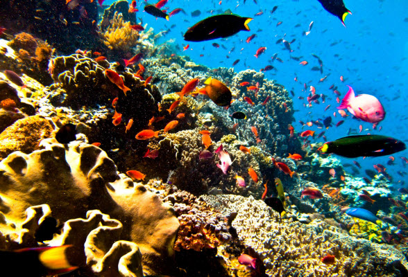 duiken-bali