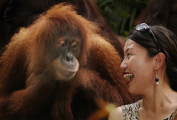vrouw-aap