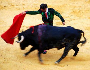 Catalonië wil stierenvechten verbieden