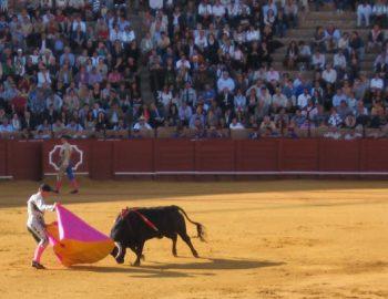 Stierenvechten: een ooggetuigeverslag