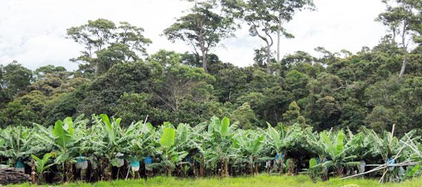Aanplant van bossen op de Filippijnen