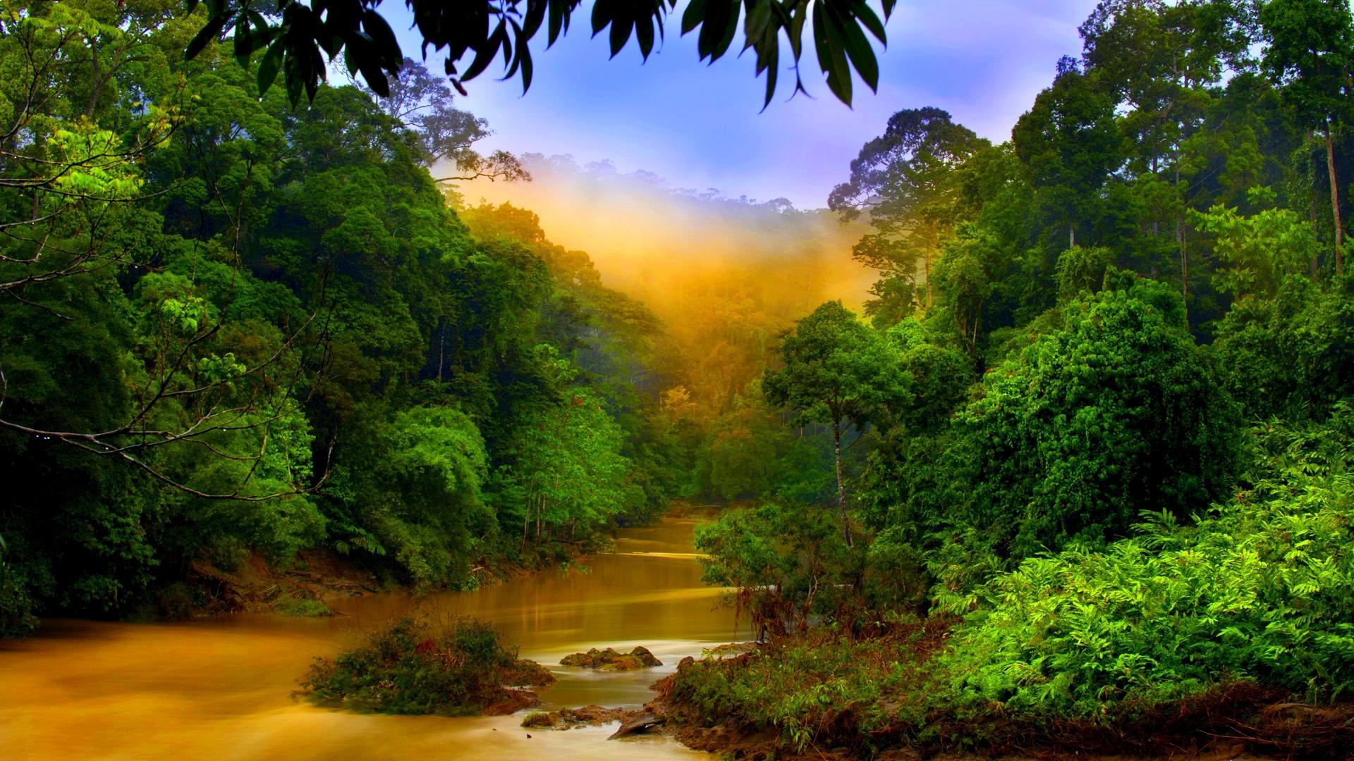 Het Regenwoud Van Maleisië