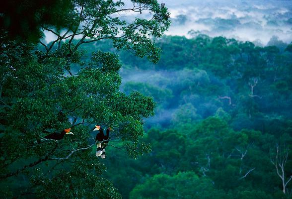 rainforest_borneo