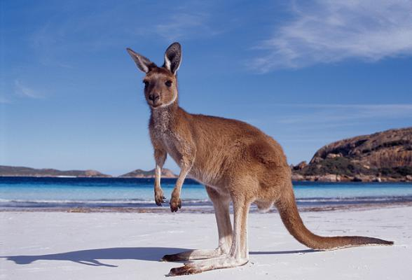 Win een gratis vakantie naar Australie.