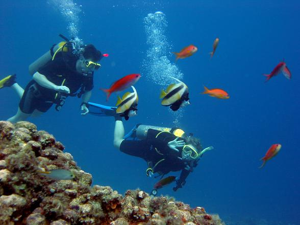 Diving in Egypt near Dahab in the red sea.