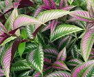 regenwoud-plant