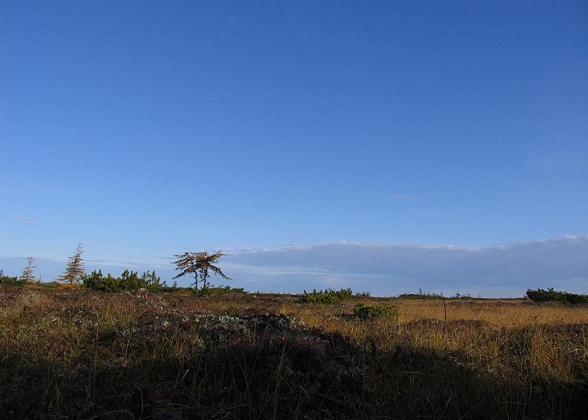 tundra-sachalin
