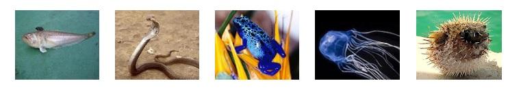 giftige dieren: pieterman, koningscobra, dendrobatidae, dooskwal, kogelvis