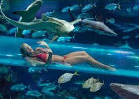 Renaissance Curacao Resort amp Casino  Book your Hotel