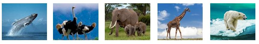 grote dieren: vinvis baardwalvis, struisvogel, afrikaanse olifant, giraffe, ijsbeer
