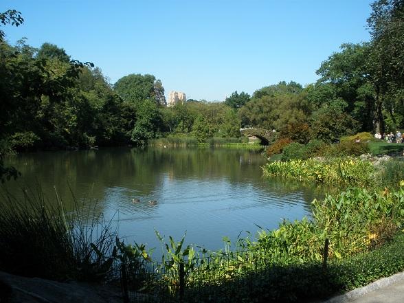 Ook New Yorkers hebben al eens nood aan rust. Een ideale plek om aan de drukte te ontsnappen is Central Park. Deze plaats heeft me eerlijk gezegd verrast. Het park is zo groot dat ik het gevoel krijg me in een klein stukje paradijs te begeven. Ik hoor vogels fluiten, voel een zachte deken van gras onder mijn voeten en zie de wind door de bladeren van de vele bomen waaien. Heerlijk!