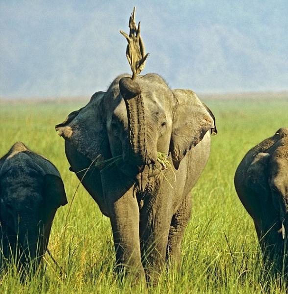 Olifant speelt met varaan