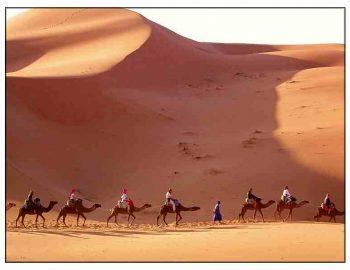 Lente in de Sinaï-woestijn