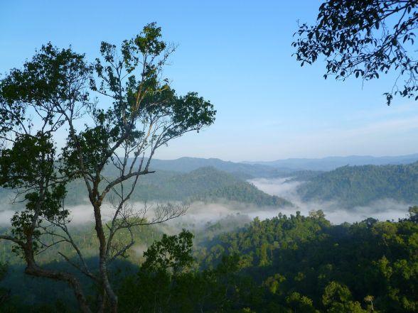 Leven als een gibbon in Laos