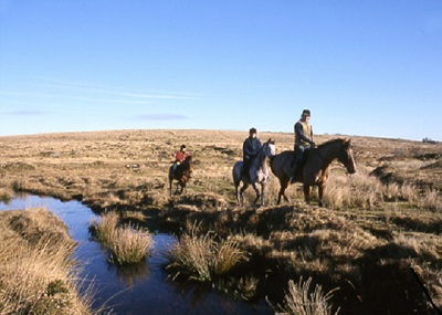 Paardrijden in Dartmoor