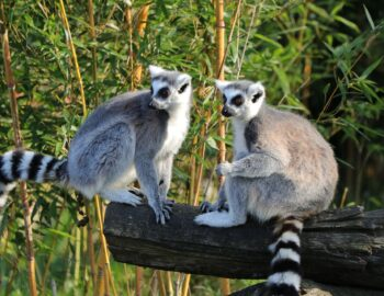 Treasure Island: Madagascar!