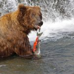 Berenexcursie Alaska