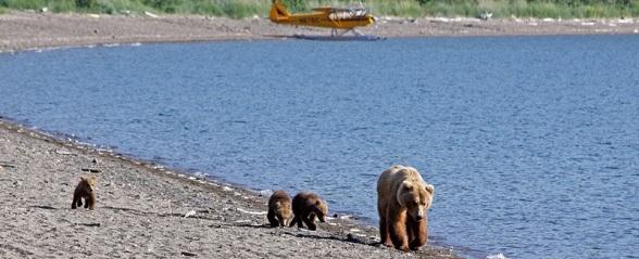 Moeder beer met jongen op strand