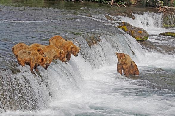 Moeder beer met jongen waterval