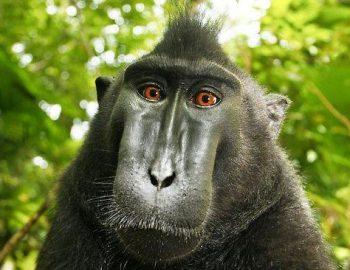 Apen stelen camera