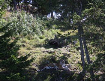 Orsa-Grönklitt in Zweden