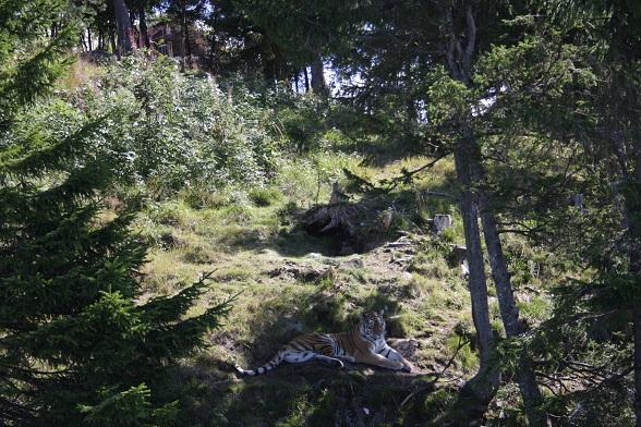 Bezoek aan natuurpark Orsa Björnpark in Zweden