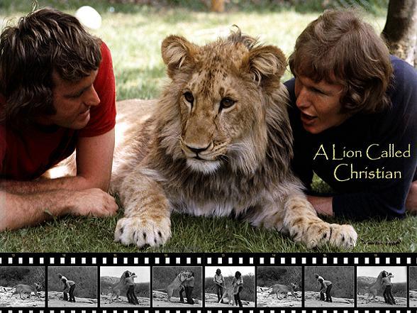 christian the lion movie