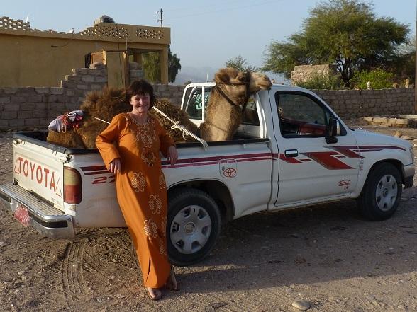 Een kameel op de pick-up om naar een grazige wei gebracht te worden. Het heeft dan net geregend en hier en daar schieten de planten uit de grond.