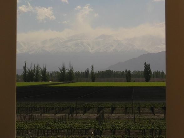 Mendoza is gelegen aan de voet van het Andesgebergte, ongeveer 960 km ten westen van Buenos Aires. Mendoza is het economisch hart van de Argentijnse wijnindustrie. Mendoza telt 5 verschillende wijngebieden met circa 140.000 ha wijnstokken. Mendoza Ligt ongeveer even ver van de evenaar als de beste wijngebieden in Frankrijk, Italië en Californië.