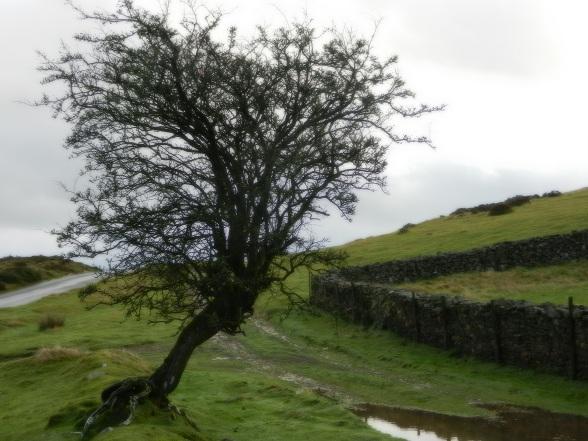 Vier dagen in Wales
