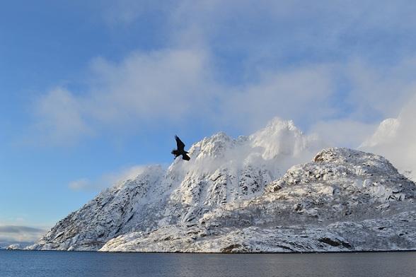 Zeearenden spotten op de Lofoten