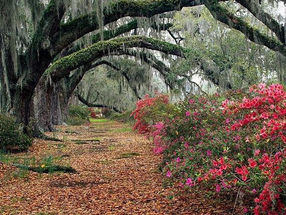 Charleston Magnolia plantation garden