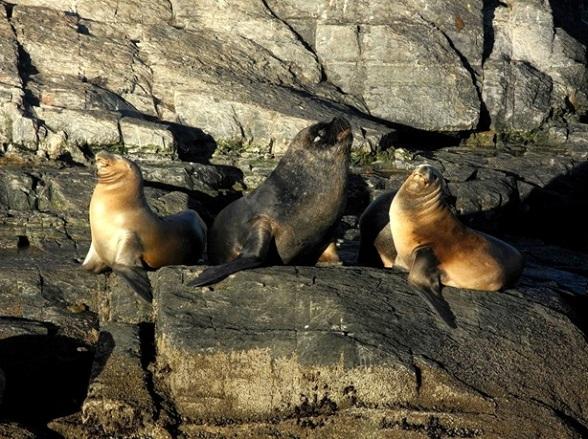 Poserende zeeleeuwen in het Zuiden