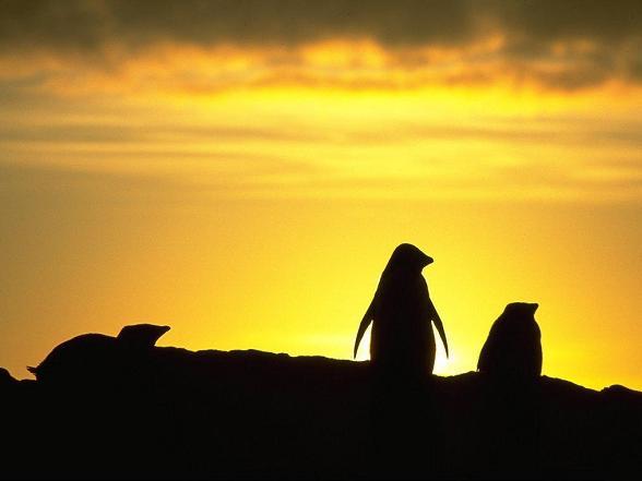 Zonsondergang  op Pinguin Island, Australie.