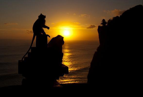 Aapjes aanschouwen de wereldberoemde zonsondergang bij de Uluwatu tempel, Bali.