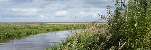 Het Deense landschap