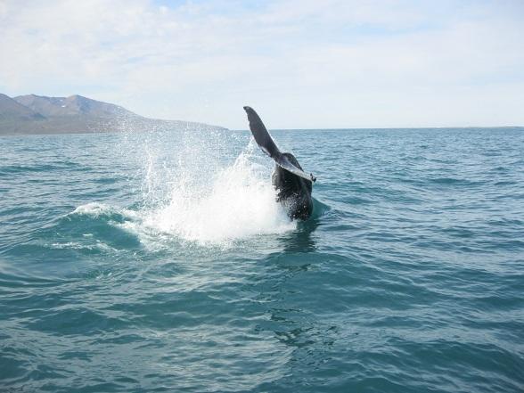 Op zoek naar walvissen