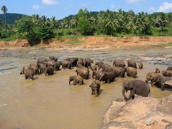 Sri Lanka: topbestemming 2013