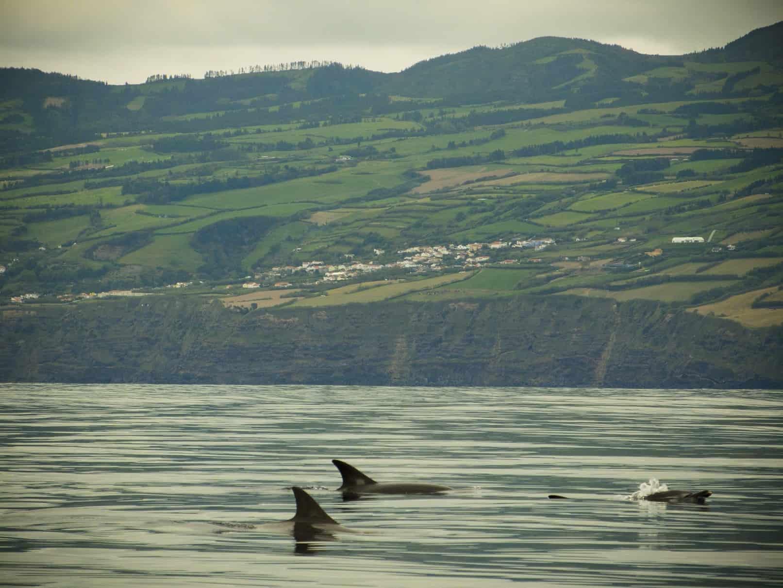 Volop leven rondom de Azoren