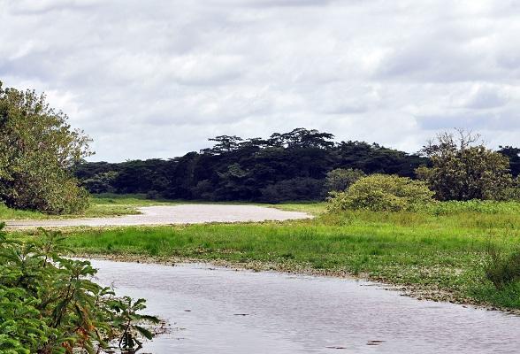 Liefhebbers van natuur zullen het natuurreservaat Caño Negro in Costa Rica fantastisch vinden. Er leven vele vogelsoorten, maar ook kaaimannen, leguanen en apen