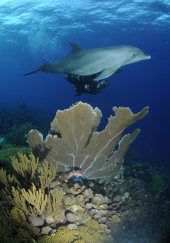 Duiken met dolfijnen op Curaçao
