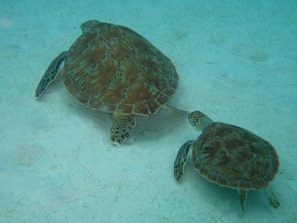 Als je dolfijnen wilt zien spelen, of zonnende schildpadden, dan is Curaçao een goede keuze
