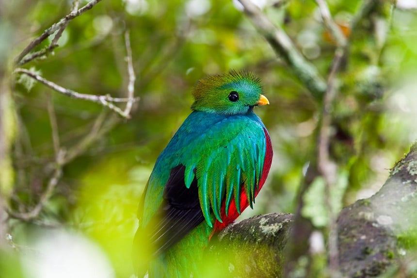 De legendarische quetzal
