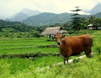 Onbekend Noord Lombok