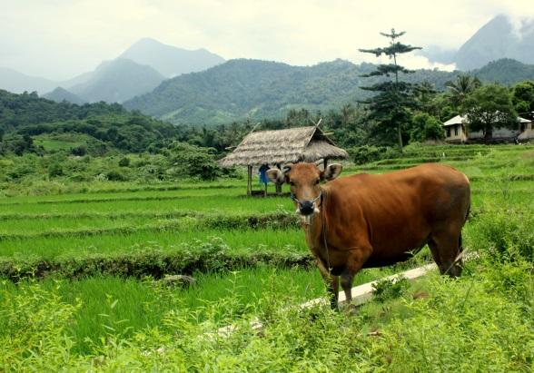 Landschap Noord Lombok