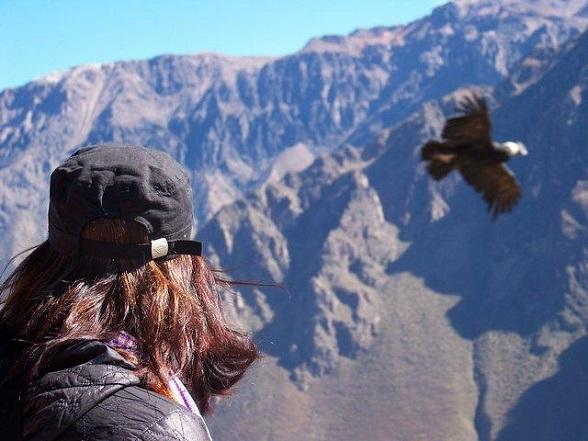 Peru-online-condor-canyon