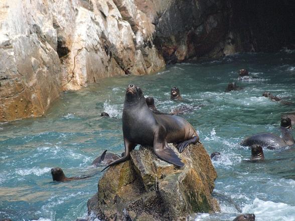 ballestas eilanden zeeleeuw rotsformatie