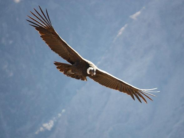 cruz-del-condor