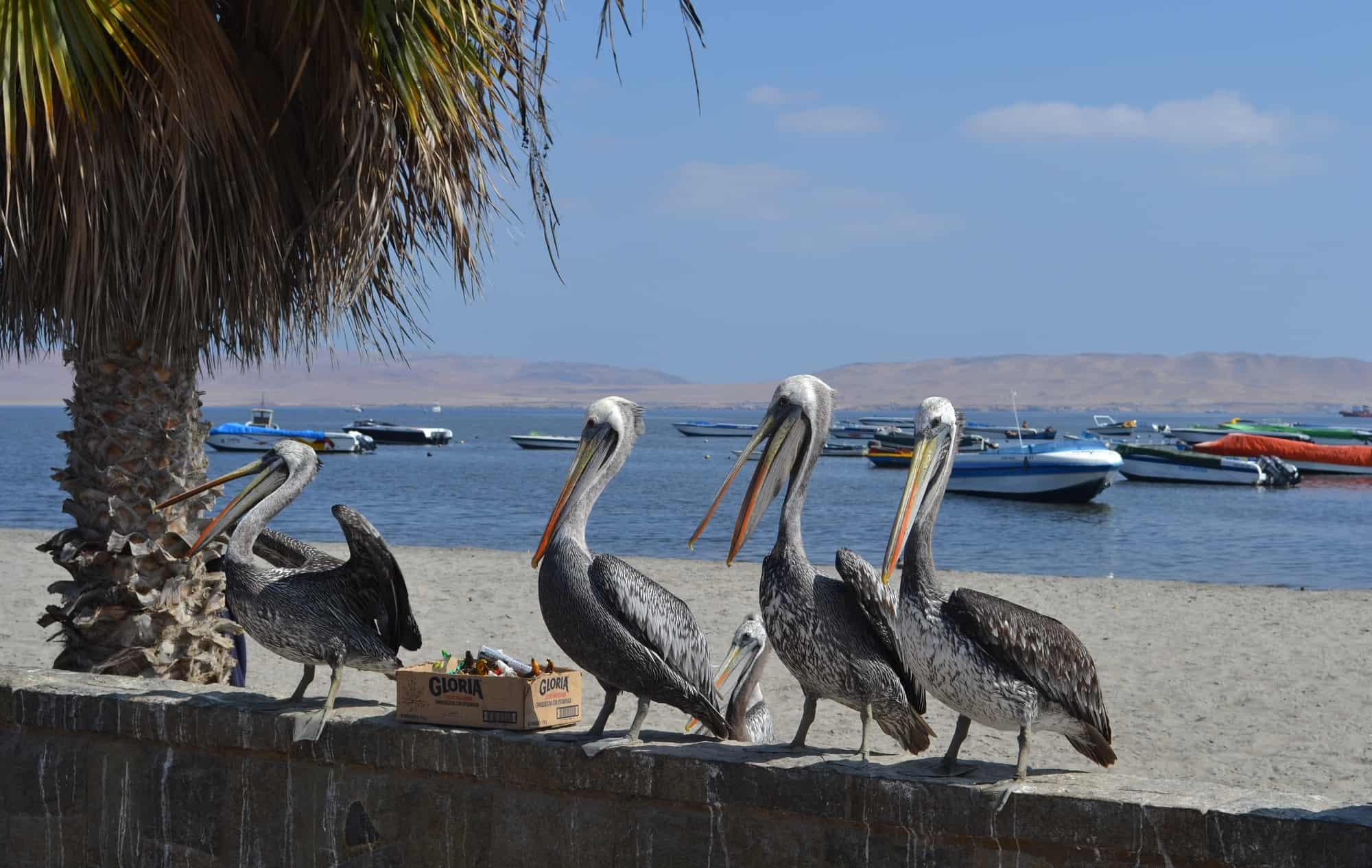 islas ballestas vanuit El Chaco
