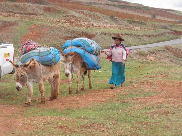 traditioneel geklede vrouw met haar ezels
